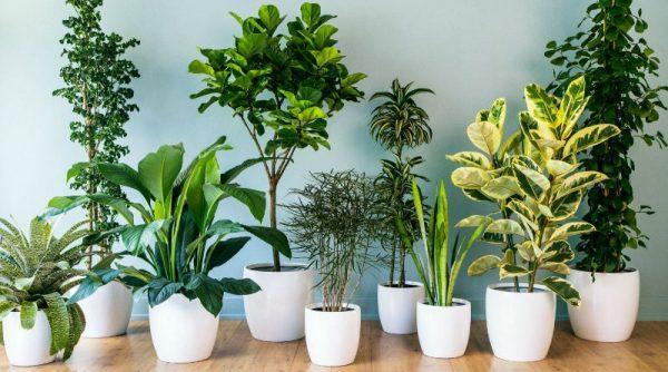 Consejos para el cuidado de las plantas de interior