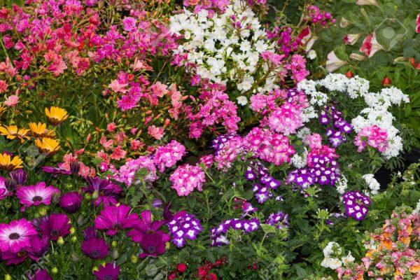 Plantas de Jardin Segun el Clima