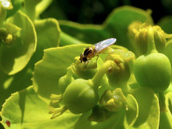 Insecticidas de origen natural
