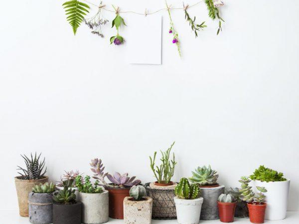 Consejos para decorar con flores y plantas para el hogar