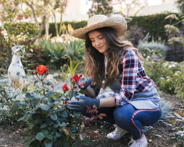 💐 Cómo elegir las plantas perfectas para decorar un jardín