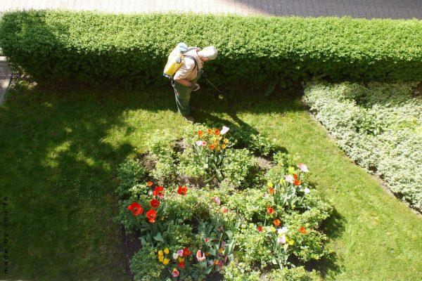 Consejos para el cuidado del jardín